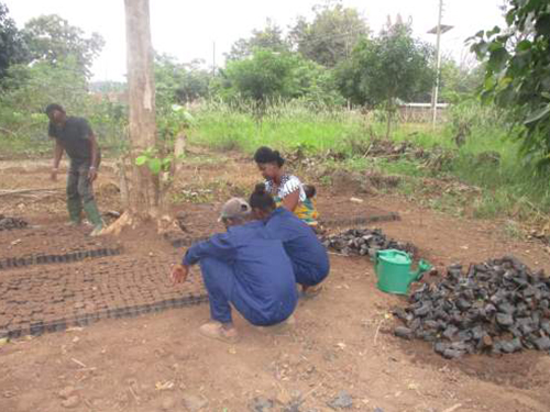 training-of-tree-nursery-and-rehabilitation