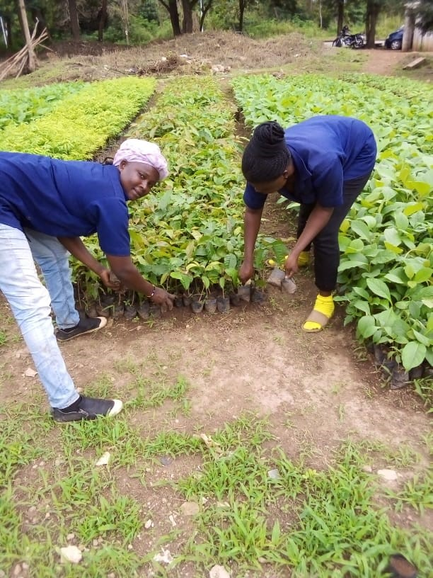 image-3-regina-matilda-monitoring-seedlings-4-july-2020